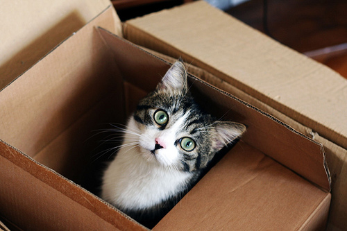Moving process can be stressful both for you and your pets