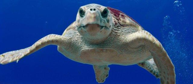 loggerhead-turtle-123402_12802