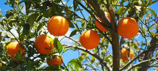 oranges-1117628_19201