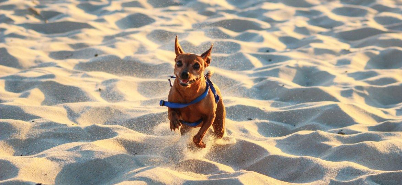 dog-1682501_1920