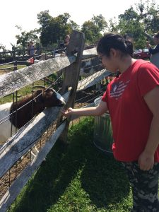 Student feeding a goat.