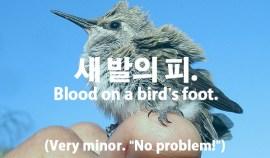60-birds-foot