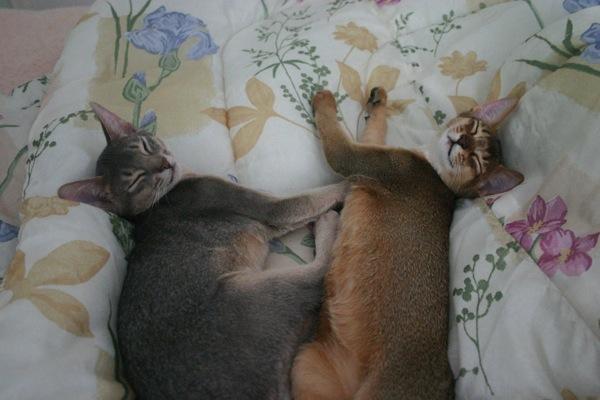 Paru and samira kittens