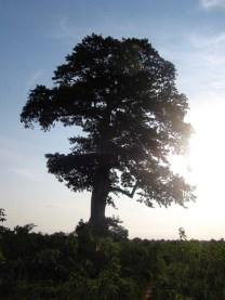 Kopeyia's Spirit Tree