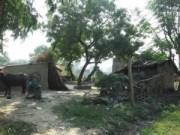 05-12-13 Gaav Aavas