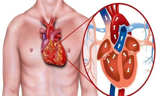 दिल की बीमारियों का कारण बन सकता है बढ़ा हुआ कोलेस्ट्रॉल