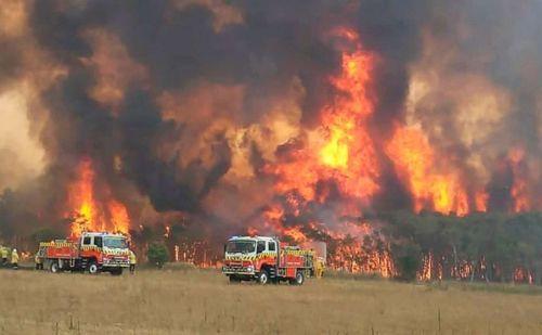 ऑस्ट्रेलिया के जंगल में अब तक का सबसे बड़ा अग्निकांड, 48 करोड़ जानवरों की मौत
