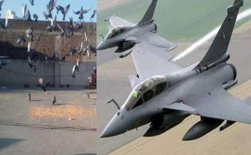 चीन- पाकिस्तान नहीं बल्कि कबूतर बने लड़ाकू विमान राफेल के लिए मुसीबत !