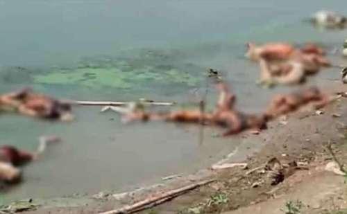 कोरोना त्रास्दी: यूपी-बिहार में गंगा किनारे बहते मिले करीब 100 अधजले शव, इलाके में दहशत !