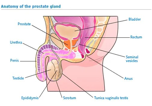 Symptom of prostate cancer