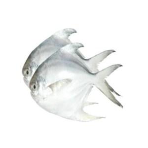 rupchanda fish 1kg