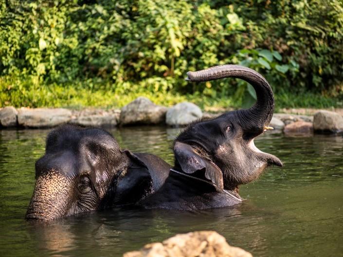 khao-lak-ausflüge-khao-lak-safari
