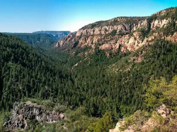 غابة كوكونانا الوطنية، الولايات المتحدة