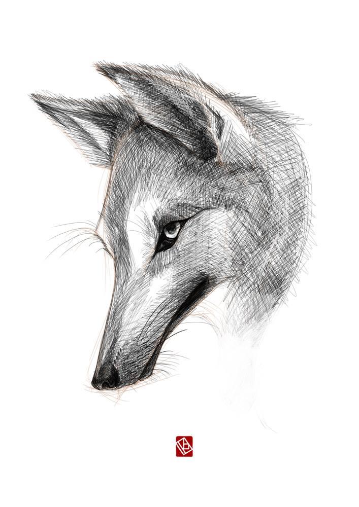 SketchyWolf_byKhasisLieb