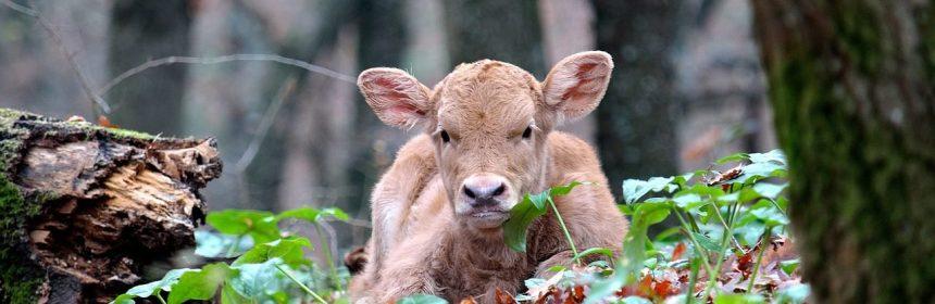 Importance of Cow, Ganga, Geeta, Gayatri in Indian Culture
