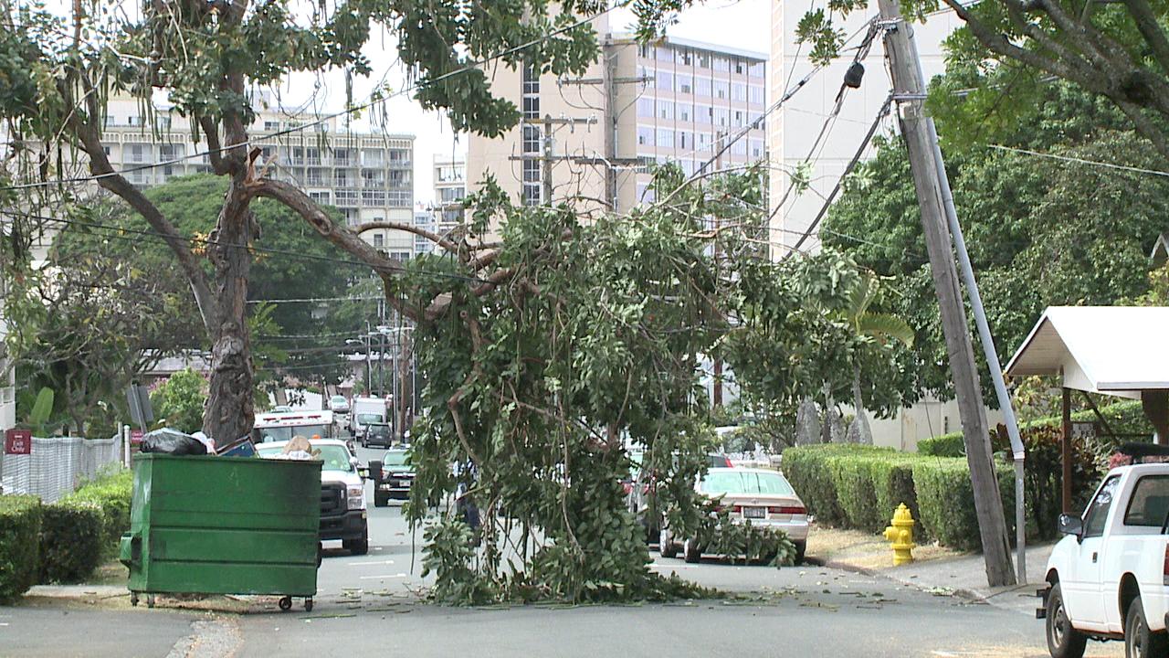 tree down on poles nehoa and poki_76670