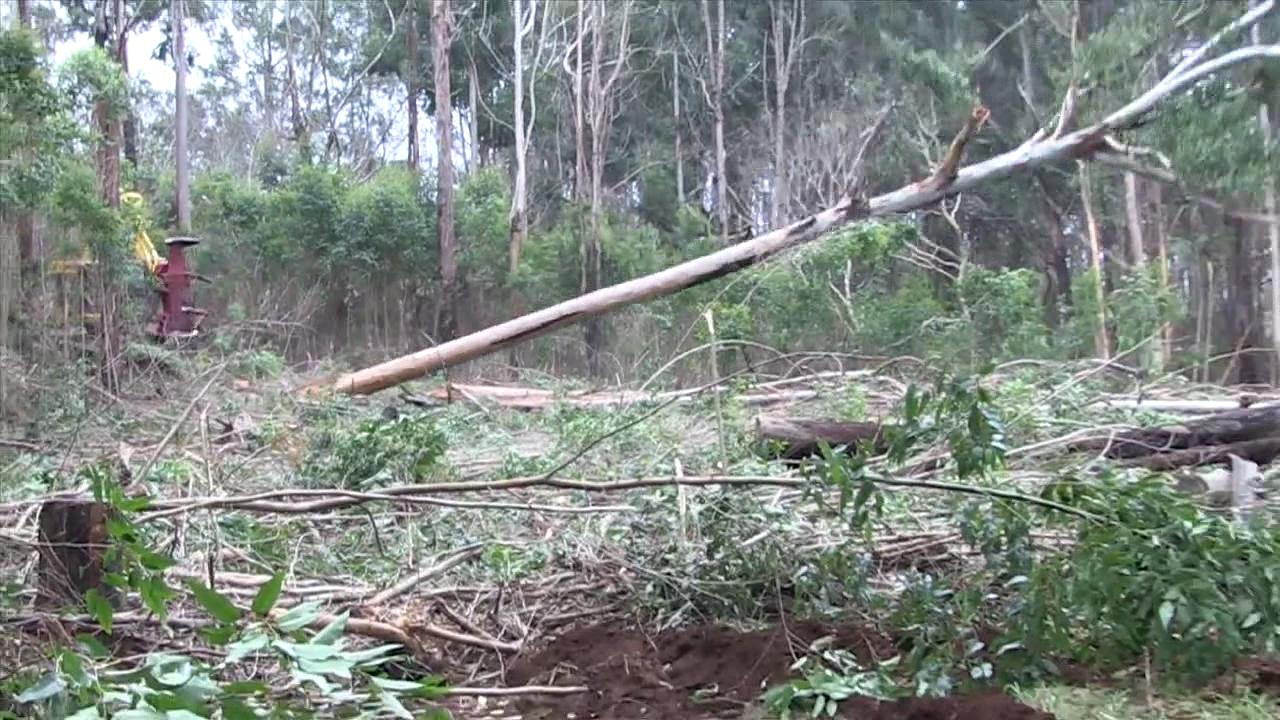 10 KOKEE TREES CUT DOWN-VO_frame_821_81970