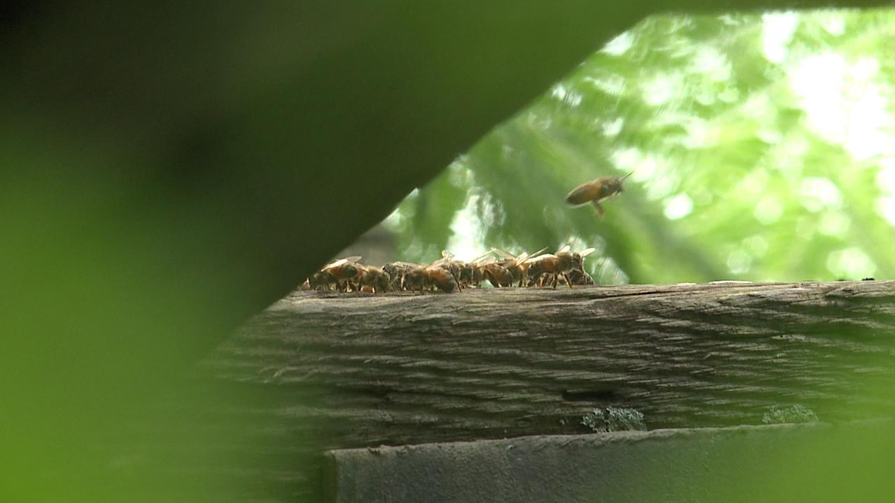 9-21 Koko Head bees_119039
