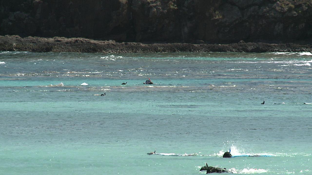 hanauma bay snorkelers_83444
