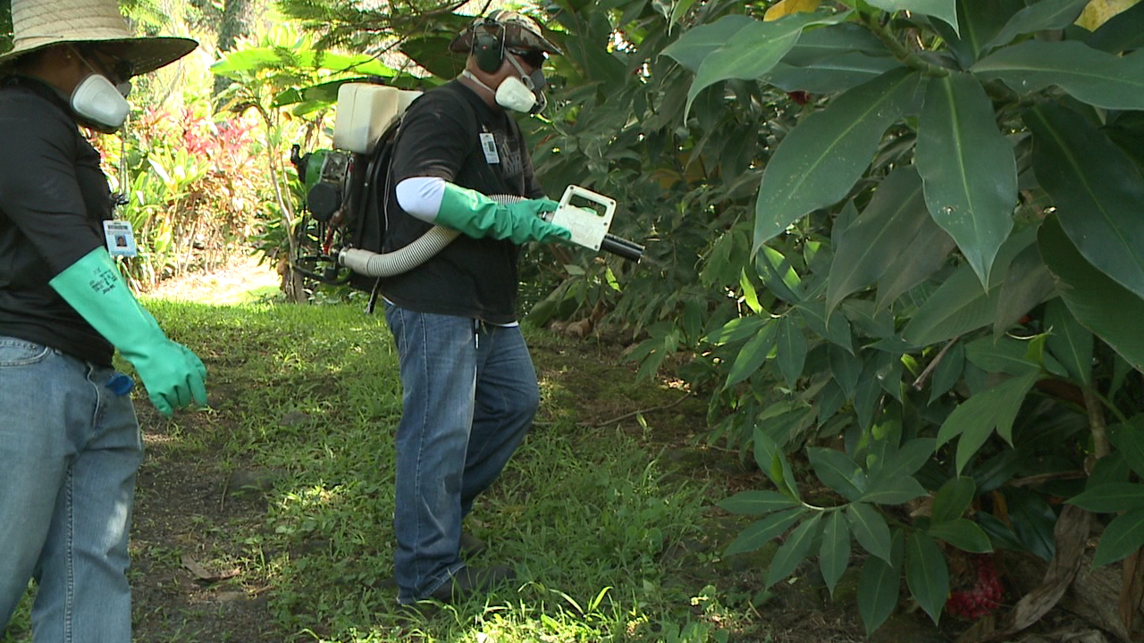 dengue fever mosquito spray hawaii island honaunau_127938