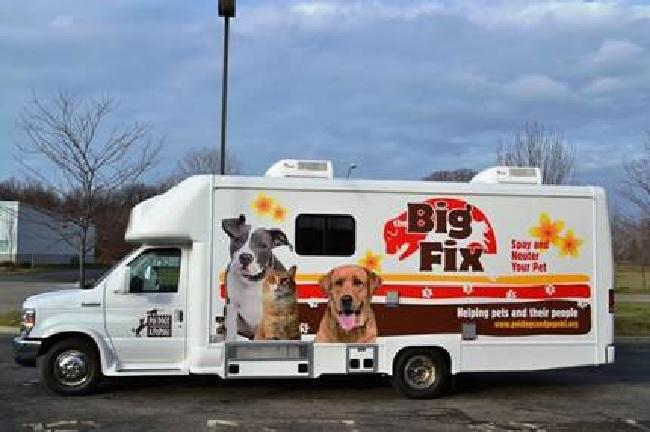 Poi Dogs and Popoki spay neuter clinic_98381