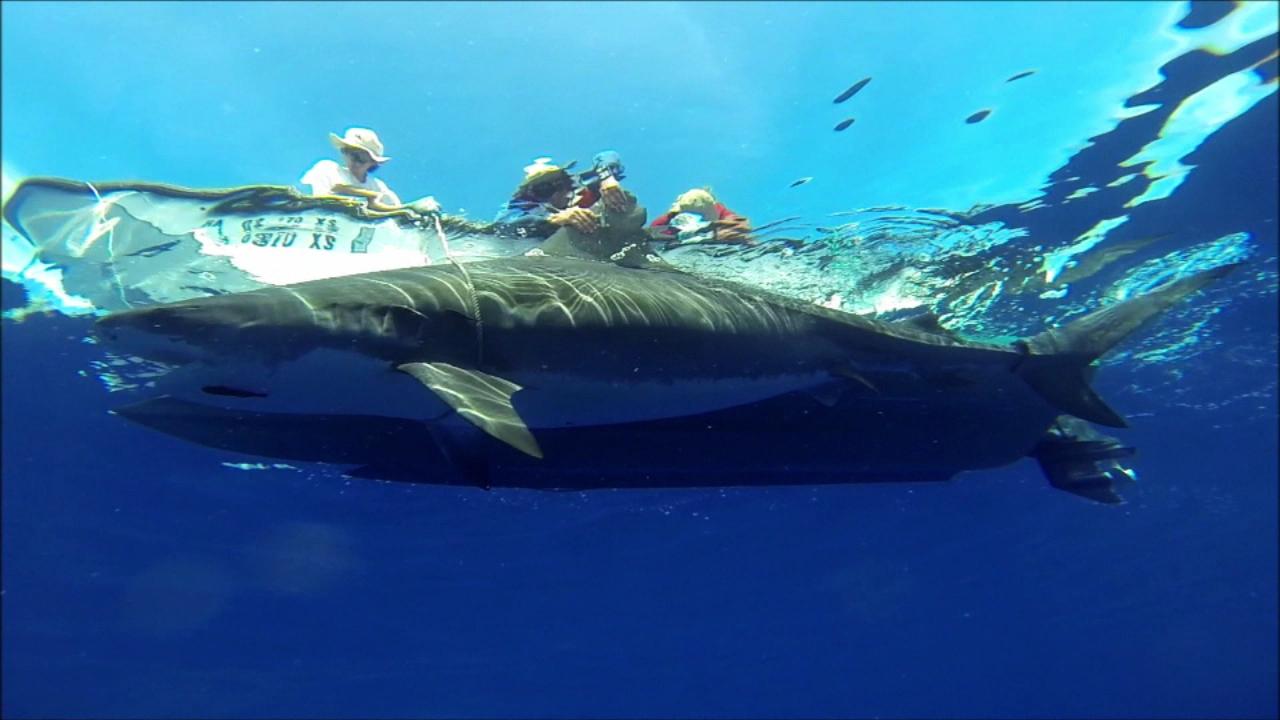 shark underwater dlnr (2)_157994