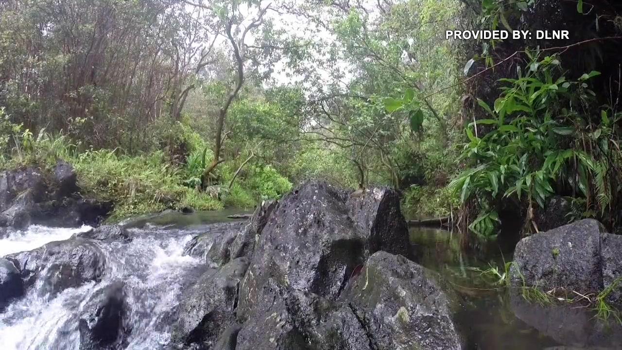 East Maui stream provided by DLNR