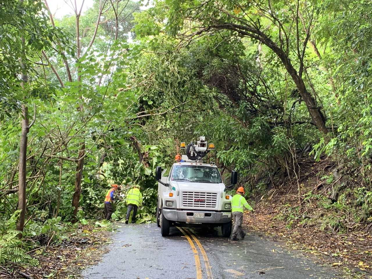 2-2-19 Round Top Drive downed tree