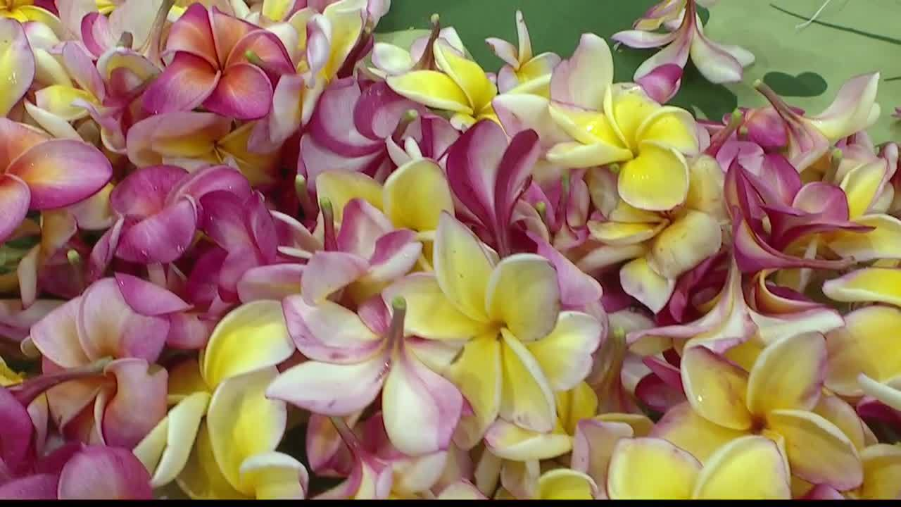 Oahu_Residents_Asked_to_Sew_a_Lei_for_Me_2_20190522194946