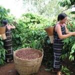 Doanh nghiệp và vấn đề phát triển bền vững