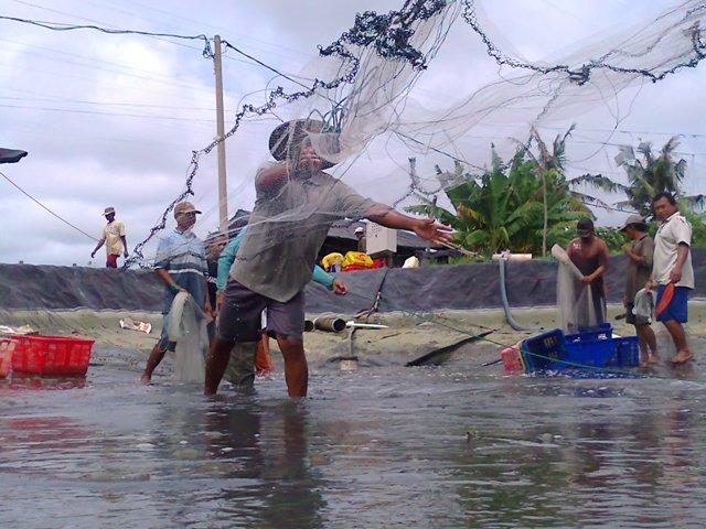 KIARA: Boikot Udang Thailand Momentum Tingkatkan Daya Saing Petambak Udang Nasional
