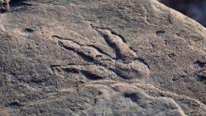 Ο 4χρονος ανακαλύπτει ίχνος δεινοσαύρων 220 εκατομμυρίων ετών