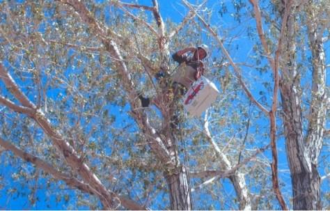 climber in tree