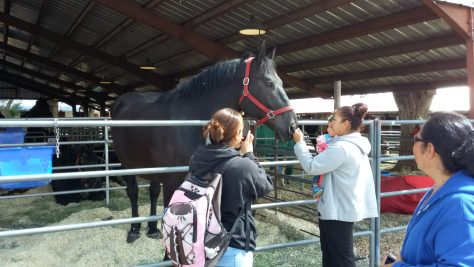 Percheron Thunder meet their fans