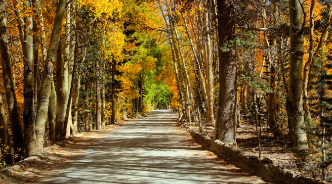 Get Ready for the Fall Colors in the Eastern Sierra!