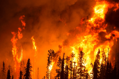 Crews Respond to Iris Fire