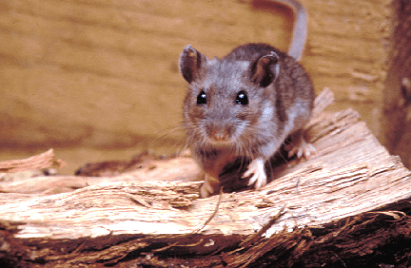 Mono County Issues Hantavirus Warning