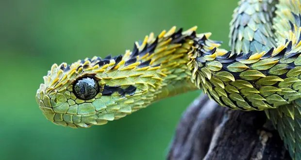 25 Kickass and Interesting Facts About Snakes – Part 2 ...