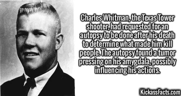 2614 Charles Whitman-Charles Whitman, the Texas Tower shooter, had requested for an autopsy to be done after his death to determine what made him kill people. The autopsy found a tumor pressing on his amygdala, possibly influencing his actions.