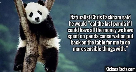 """2634 Panda Conservation-Naturalist Chris Packham said he would """"eat the last panda if I could have all the money we have spent on panda conservation put back on the table for me to do more sensible things with."""""""