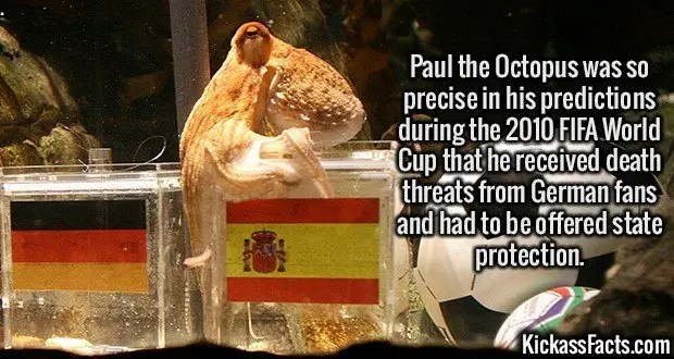 2440 Paul the Octopus-Paul the Octopus was so precise in his predictions during the 2010 FIFA World Cup that he received death threats from German fans and had to be offered state protection.