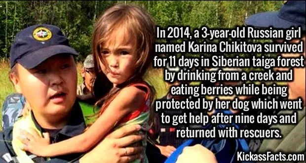 3102 Karina Chikitova-In 2014, a 3-year-old Russian girl named Karina Chikitova survived for 11 days in Siberian taiga forest by drinking from a creek and eating berries while being protected by her dog which went to get help after nine days and returned with rescuers.
