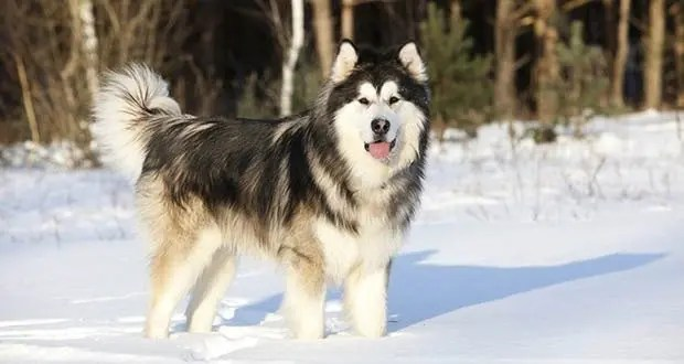 25 Interesting Facts About Dogs – Part 4 | KickassFacts.com