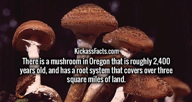 5-mushrooms.jpg?w=618
