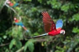 birds of paradise at crees