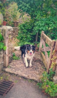 dog at gate waiting for walk