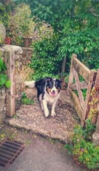 dog at gate waiting for walk