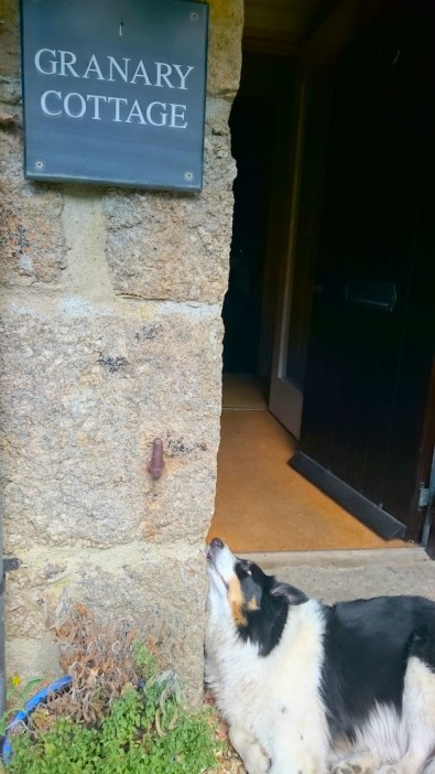 dog looking up at house sign