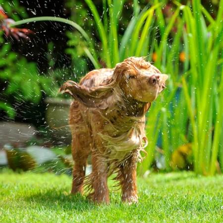 Fox Poo Shampoo Barney the Dog ©Alistair Heap +44(0)7967638858 Photo Credit: Alistair Heap