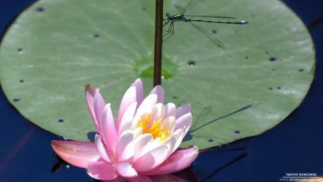 flower-004_hd-720p